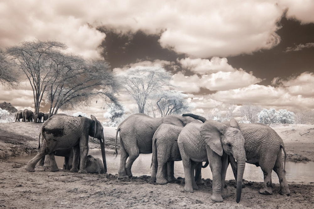 Kenya_2015_red-1083-103