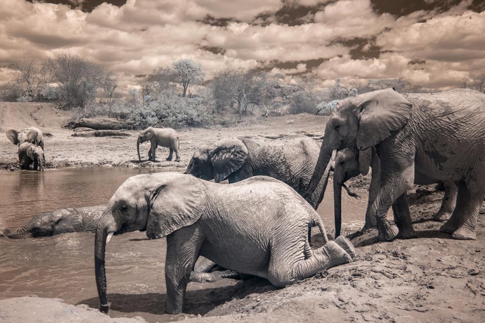 Kenya_2015_red-1088-104