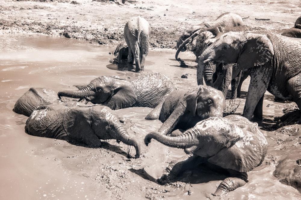 Kenya_2015_red-1225-105