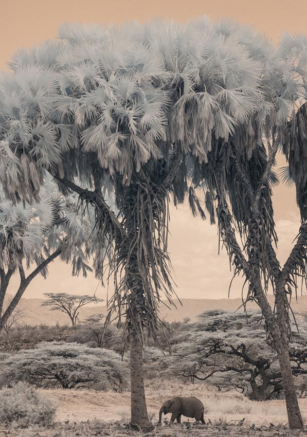 Kenya_2015_red_-2471 px3