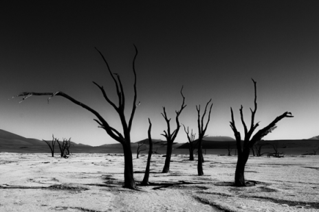 Category for my image mysterious sossuvlei dunes in the 12th black white spider awards as well as a nomination for my image deadvlei in namibia
